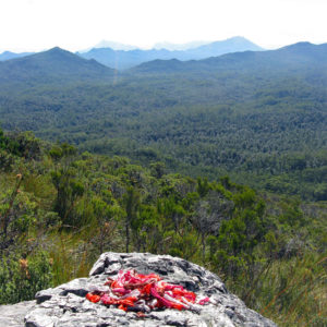 Wire coils ready for weaving, piled on a rock, with the view from the slopes of Mt Bowes, Tasmania, in the background.