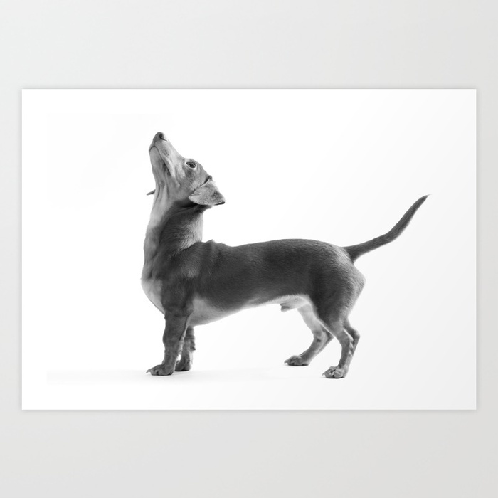 Hello up there! Minimalist black and white art print of a dachshund by BarnaBaby on Society6.