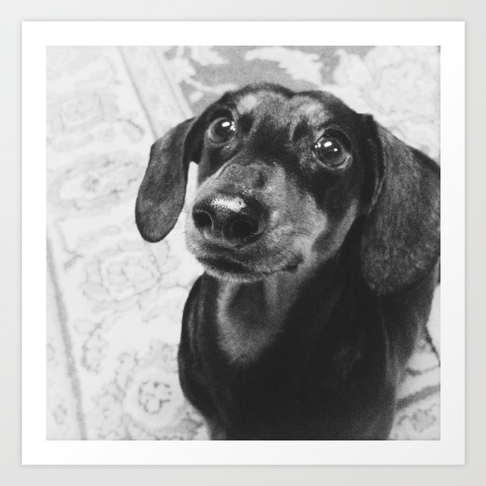 Black and white art print of Dachshund by Jessica McDowell on Society6