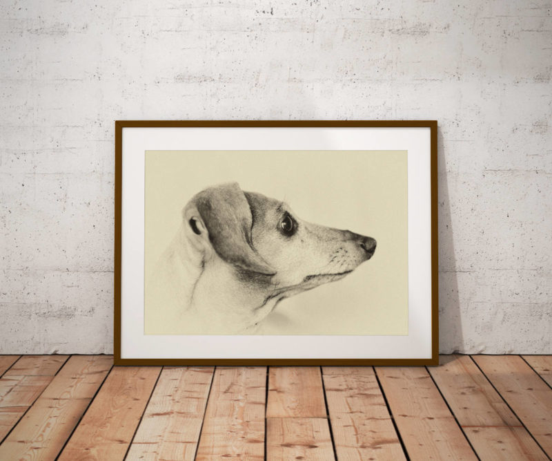 Fine art sepia print of a Dachshund's head, side view, by The Sultans of Swag on Etsy