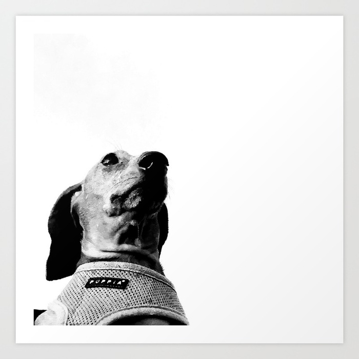 Striking black and white art print of a dachshund by Unreal City on Society6