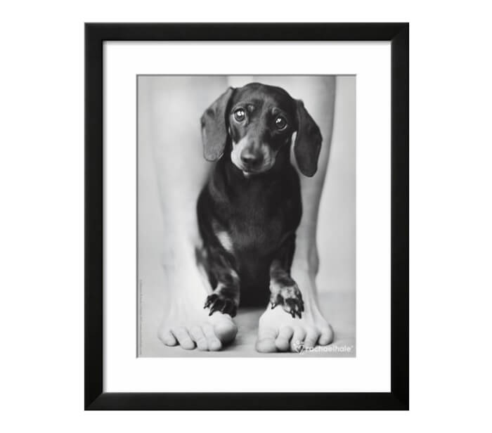 Sweet black and white art print of sausage dog standing between a person's legs by Rachael Hale on art.com